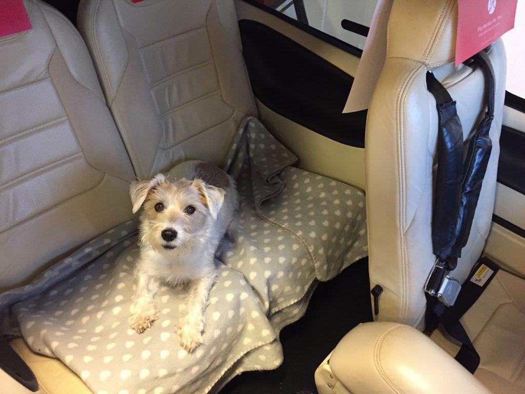 Privatflugzeug mit einem Haustier