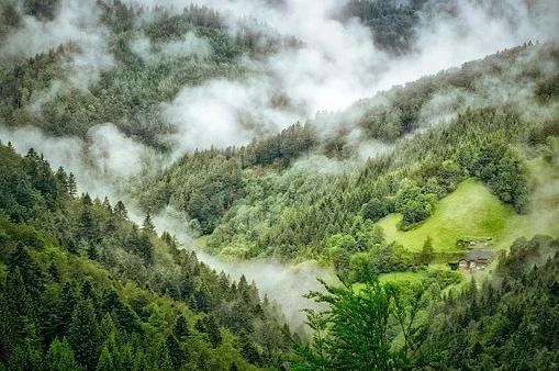 Forêt-Noire