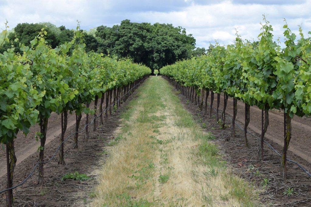 une des régions viticoles